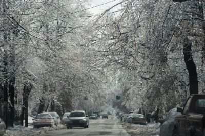 An ice storm left a thick coating of ice on trees, shrubs, cars and power lines in Louisville, KY, plunging residents into the cold and darkness when the power went out.